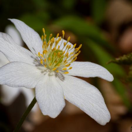 Fotokurse in der Natur - Foto-Wandern.com