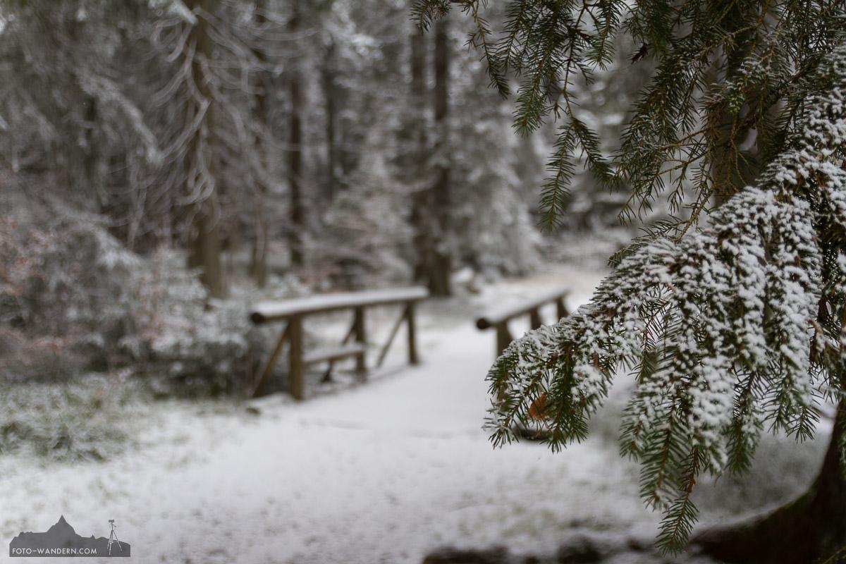 Winteranfang im Nationalpark Harz