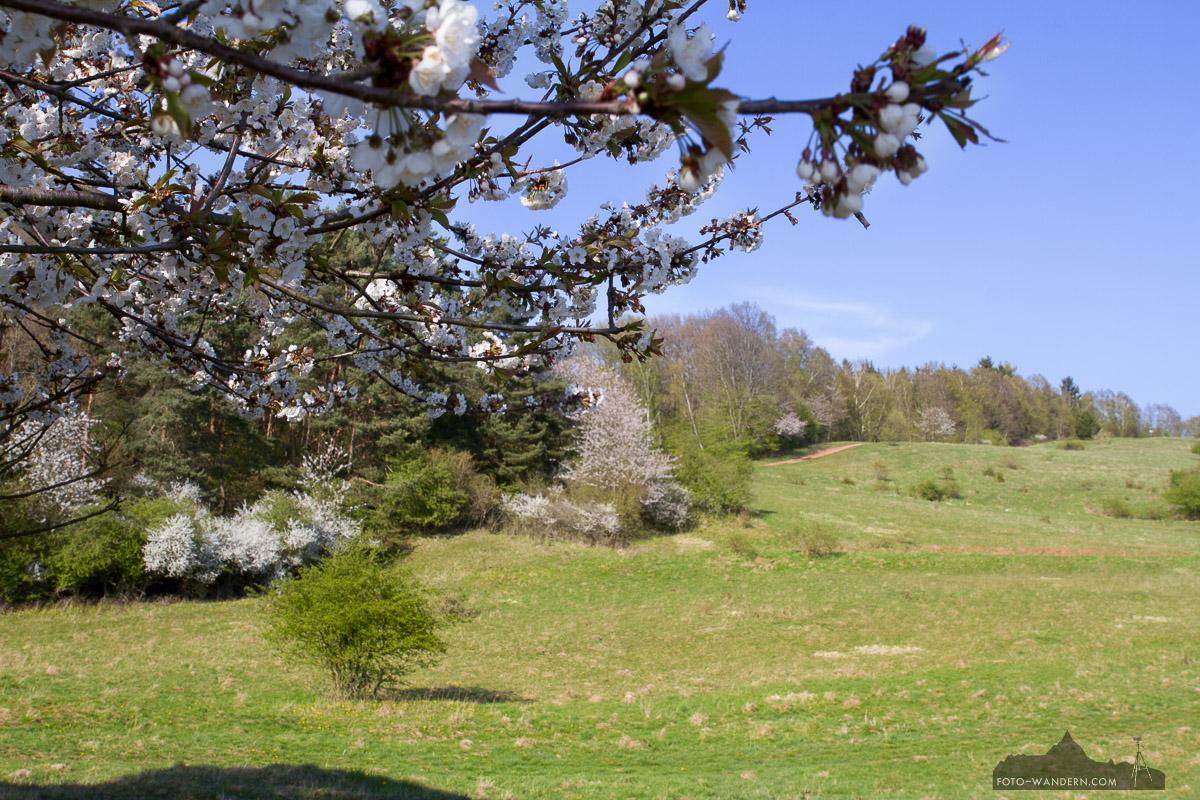 Frühling in der Rüdigsdorfer Schweiz