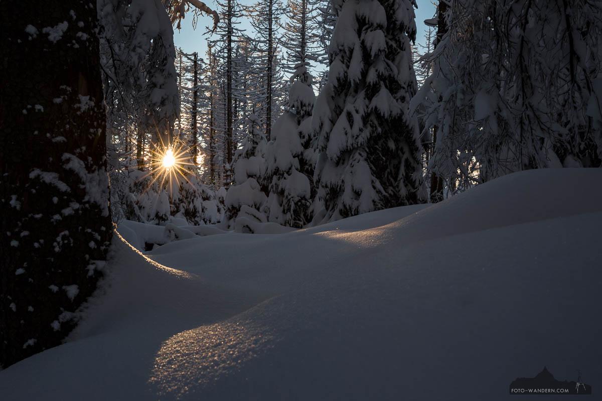 Sonnenstern im Winter-Märchenwald Harz