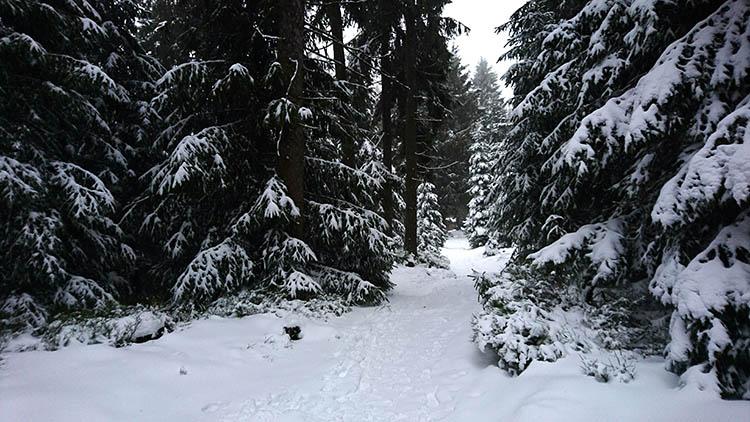 Einzelcoaching im Oberharz mit Foto-Wandern.com