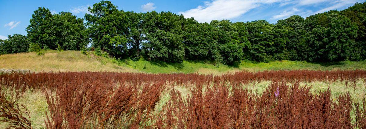 Fotowanderung am Bauerngraben im Südharz