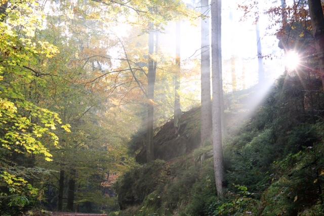 Magische Momenten beim Fotokurs Landschaftsfotografie in der Sächsischen Schweiz auf dem Weg zur Affensteinpromenade mit Foto-Wandern.com © Mario Bussmann