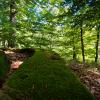 Fotokurs im Naturpark Südharz