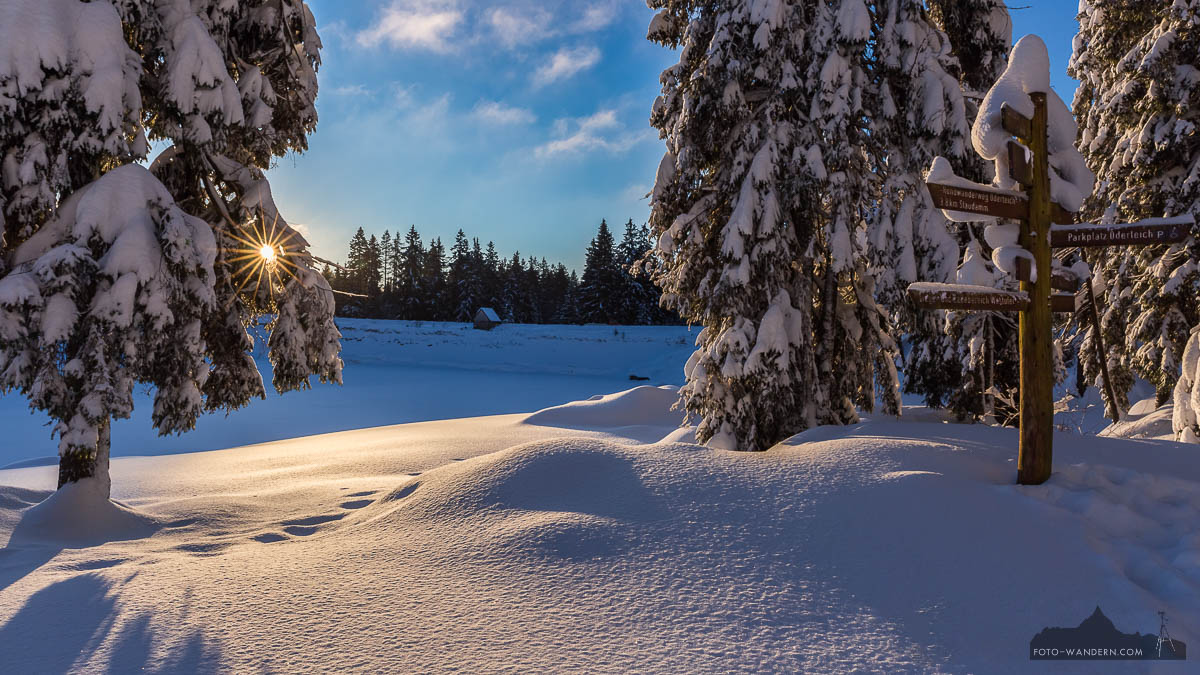 Sonnenaufgang im Winter am Oderteich