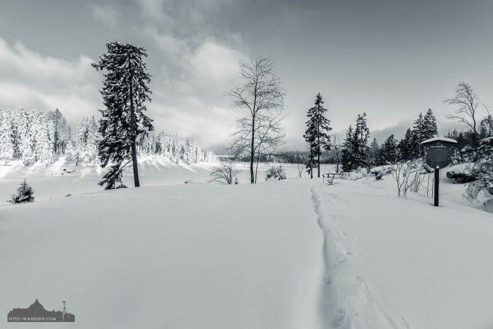 Winter im Oberharz - Oderteich
