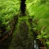 Fotowanderung Oberharzer Wasserregal - Huttaler Widerwaage