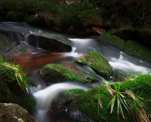 Fotokurs Langzeitbelichtung im Nationalpark Harz mit Foto-Wandern.com © Dana Struve