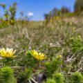 Fotowanderung ins Orchideenland am Lutherweg zum Wipperdurchbruch Günserode