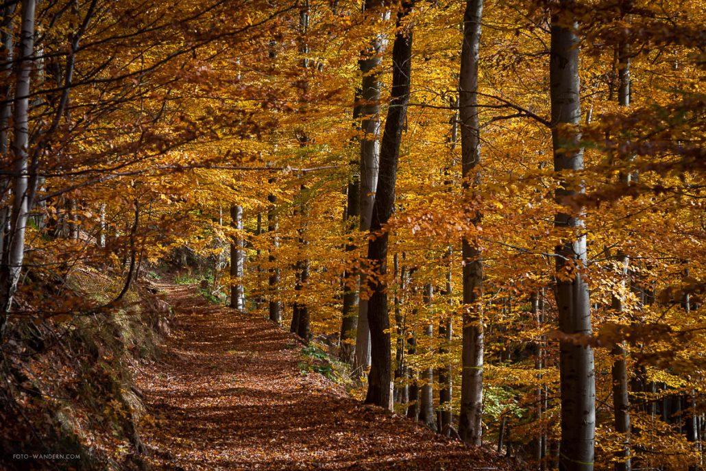 Fotokurs-Wanderwoche im Harz - Herbst 2017 - Waldwege im Südharz (auf dem Weg zum Poppenberg)