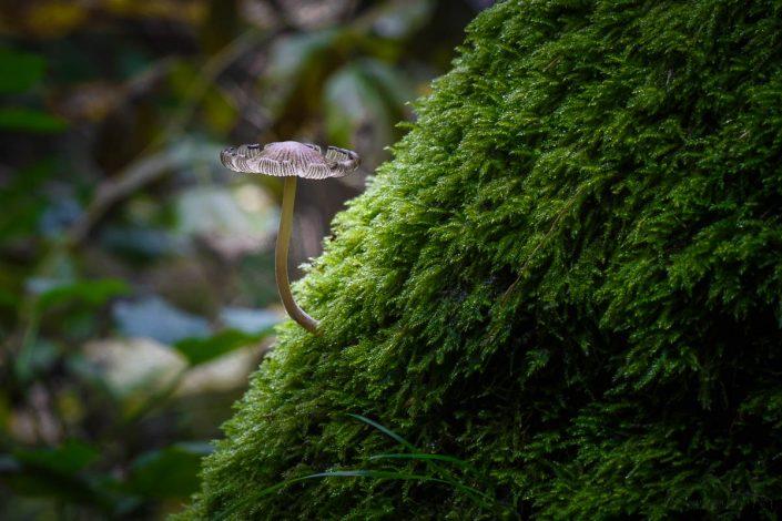 unterwegs im Bodetal - Harz © Andreas Levi