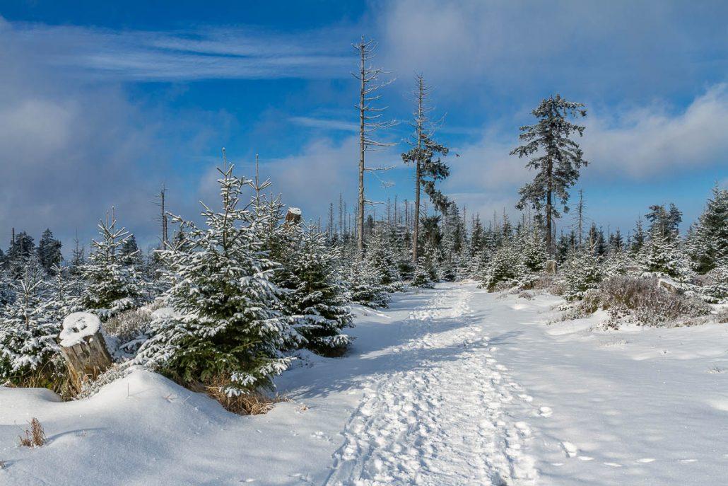 Winter-Fotowanderungen im Harz mit Foto-Wandern.com