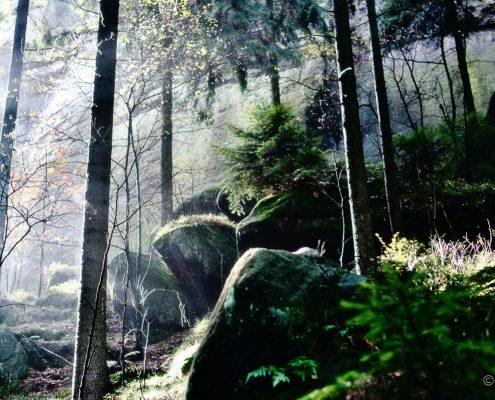 Fotokurs-Wochenende auf dem Malerweg in der Sächsischen Schweiz - Herbst 2017 © Jan S.