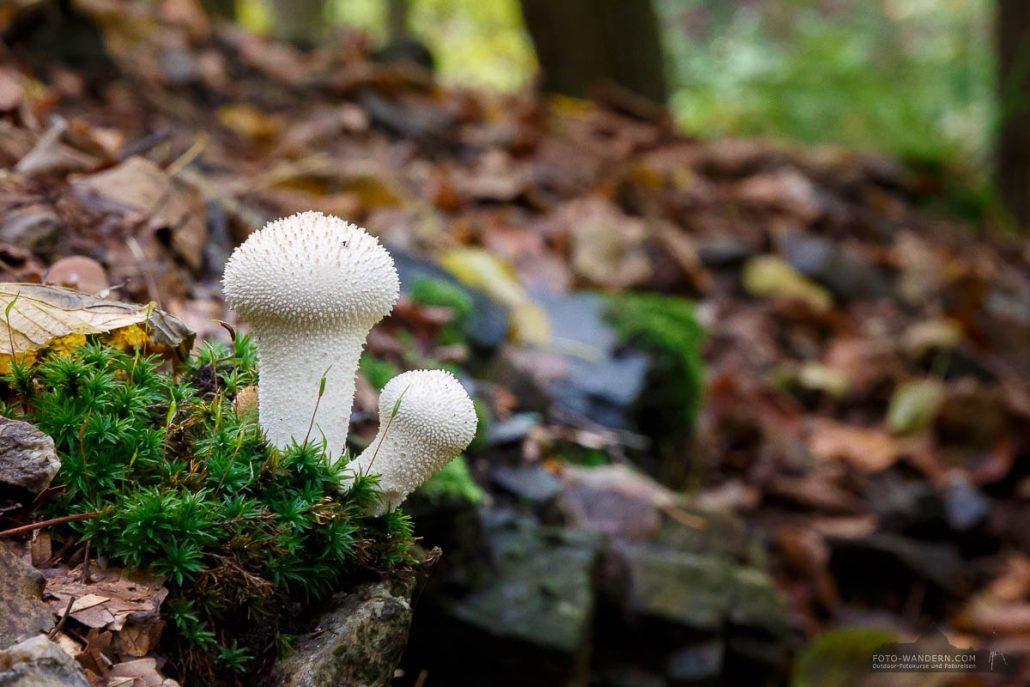 Herbst im Bodetal, Harz