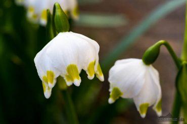 Fotokurs Makrofotografie im Frühjahr