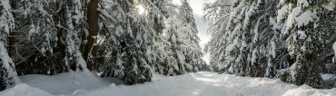 Fotowanderung von Benneckenstein nach Sorge im Harz