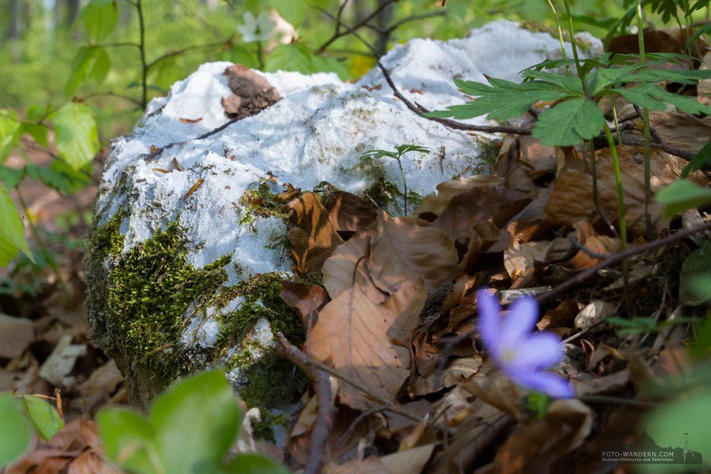 Fotokurs-Wanderwoche im Harz - Frühjahr