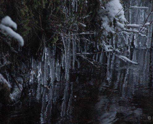 Winter-Fotowanderung im Oberharz © Insa B.