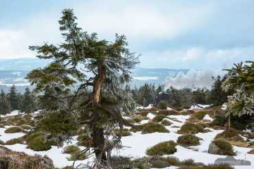 Fotoworkshop-Wochenende Harz-Winter