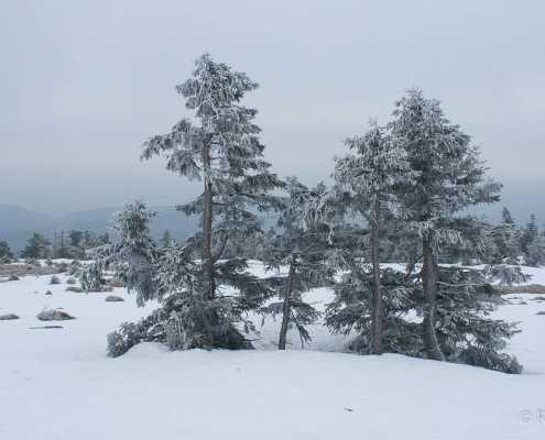 Fotoworkshop-Wochenende Harz-Winter 2018 © Rudolf L.