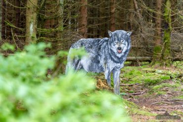 Fotowanderung auf dem Naturmythenpfad im Nationapark Harz bei Braunlage
