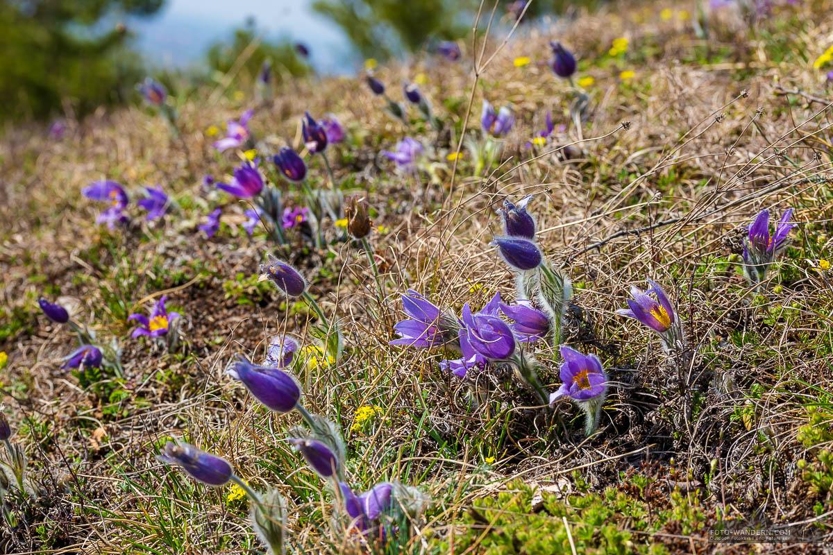 Fotoworkshop-Wochenende Harz-Frühjahr 2018 in der Badraer Schweiz