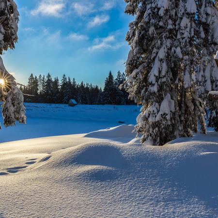 Winterwandern und Fotokurse im Harz