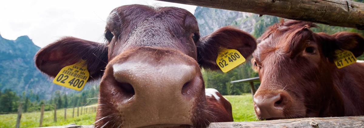 Fotokurs-Wanderwoche Berchtesgadener Land © Dagmar K. - 15