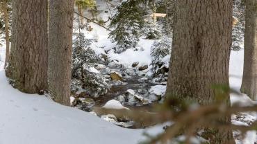 Winter-Fotokurs Landschaftsfotografie im Harz mit dem NDR