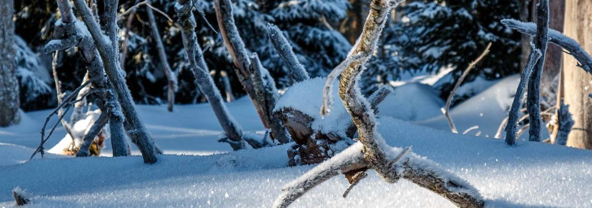 Winter-Fotowanderung im Oberharz