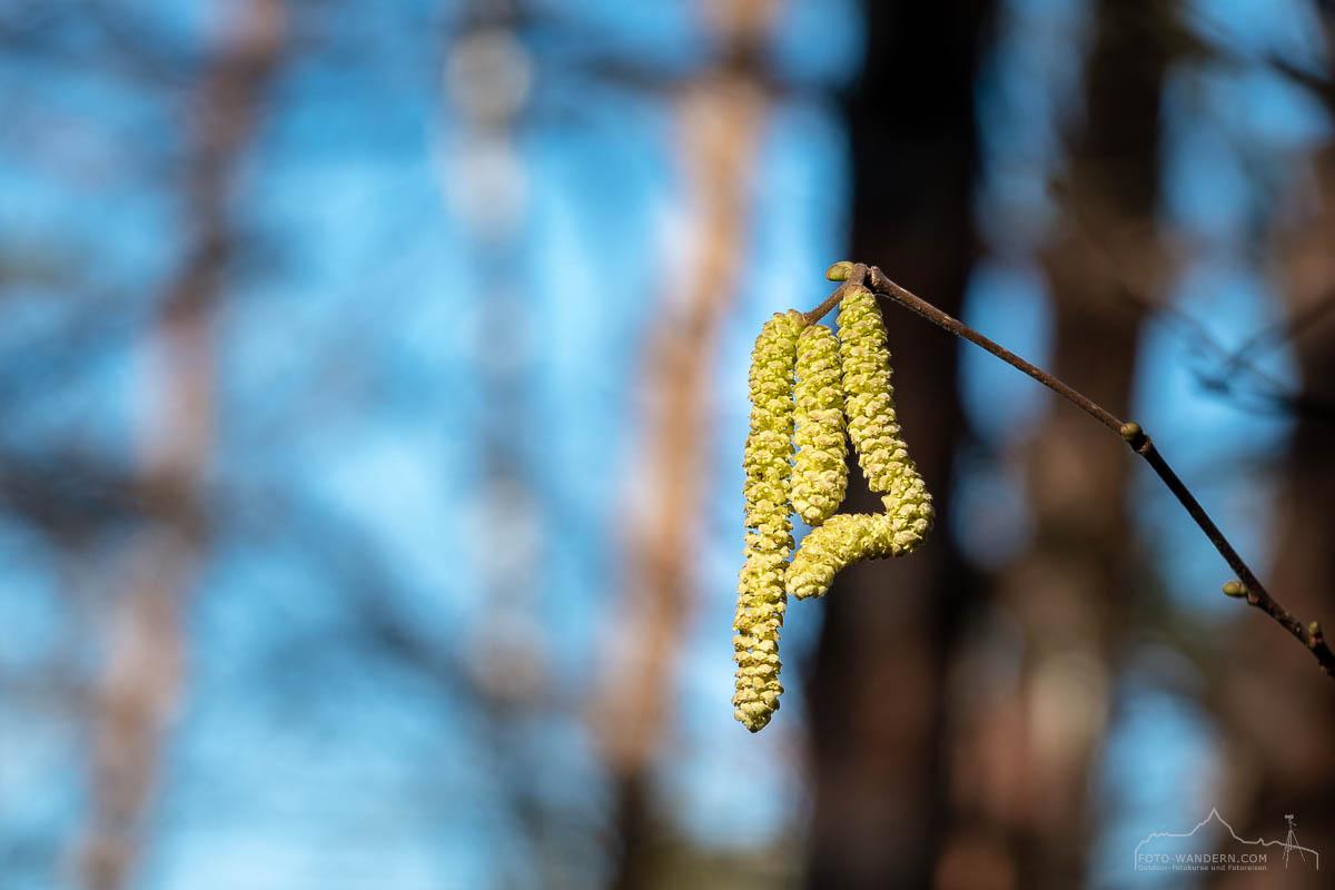 Frühling im Südharz