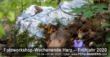 Fotoworkshop-Wochenende-Harz - Frühjahr 2020 - Karst