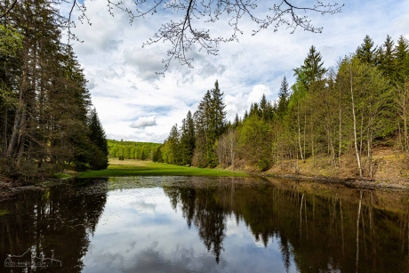 Helltalsteich im Naturpark Südharz