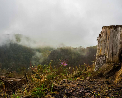 Fotokurs Landschaftsfotografie im Ilsetal © Tilman R.