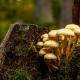Herbst an der Warmen Bode im Harz