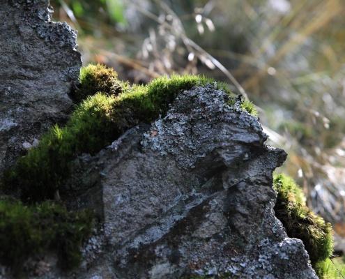 Einzelcoaching im Selketal, Harz