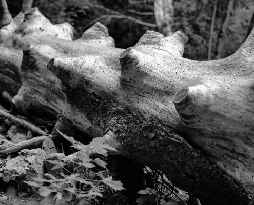 Fotokurs-Wanderwoche im Hochschwarzwald